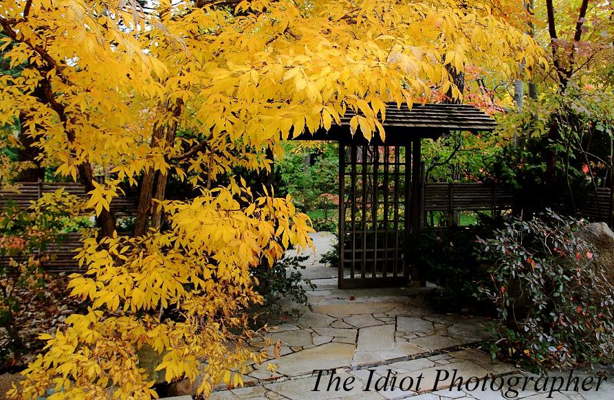 Garden Gates Design images