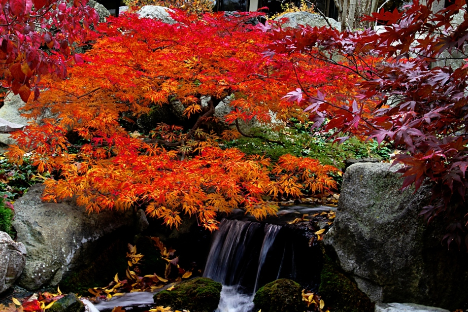 Leaves and water for Little japanese garden