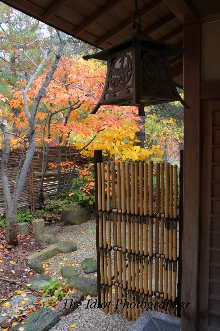 anderson japanese gardens |