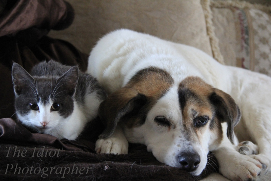 hector and kiska nap time