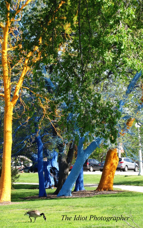 painted trees