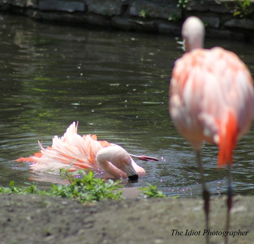 flamingo down