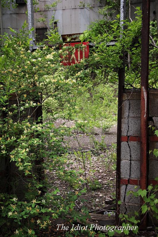 flower adorned exit