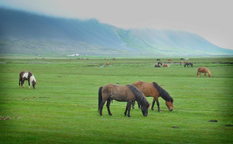horses4.wp