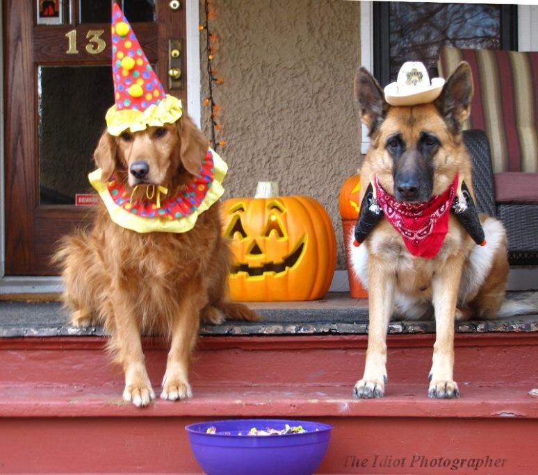 halloweenie dogs