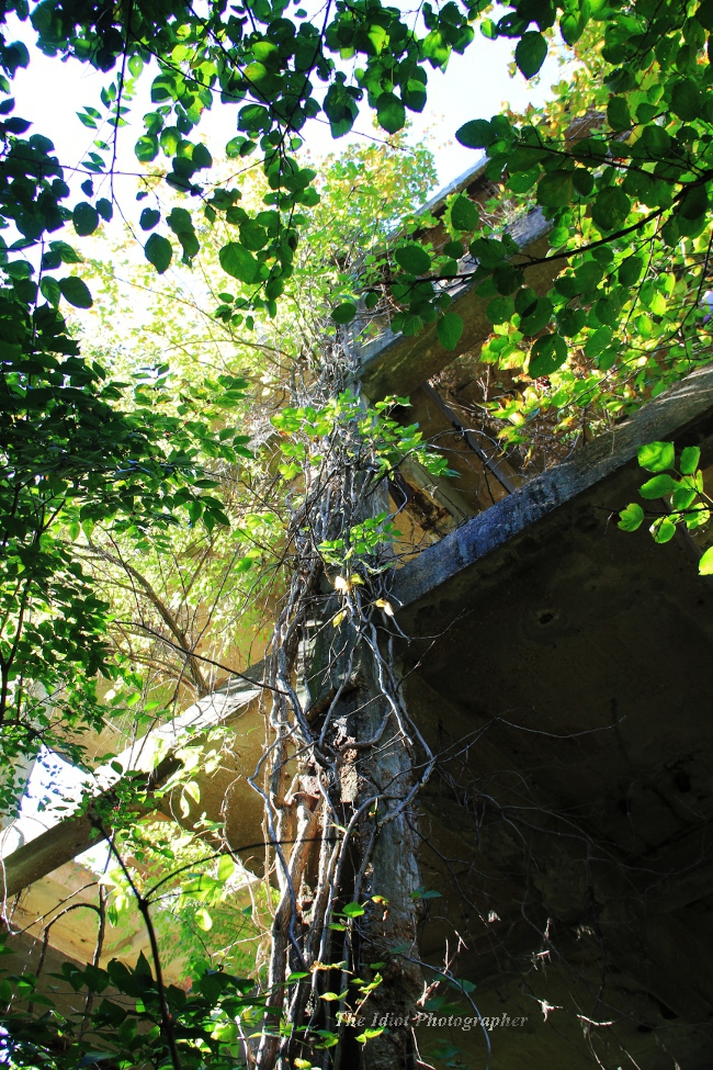 Armour creeper overgrowth