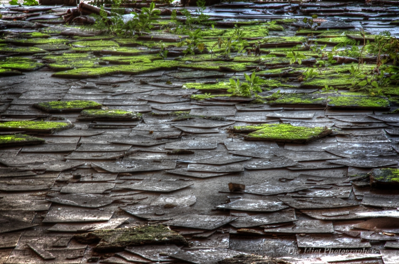 moss tiles large