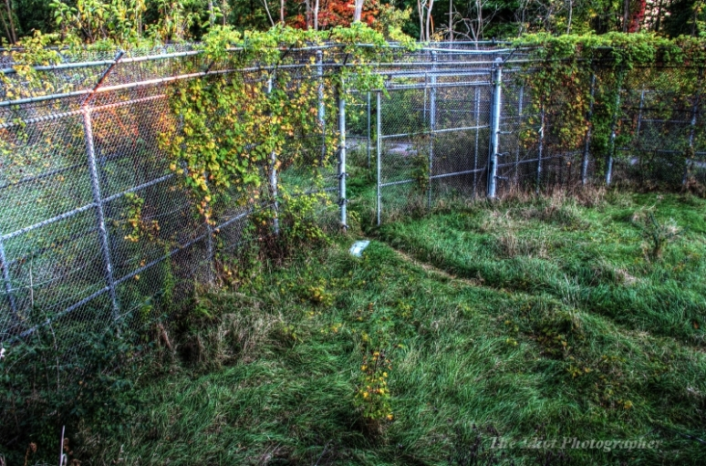 z lion cage