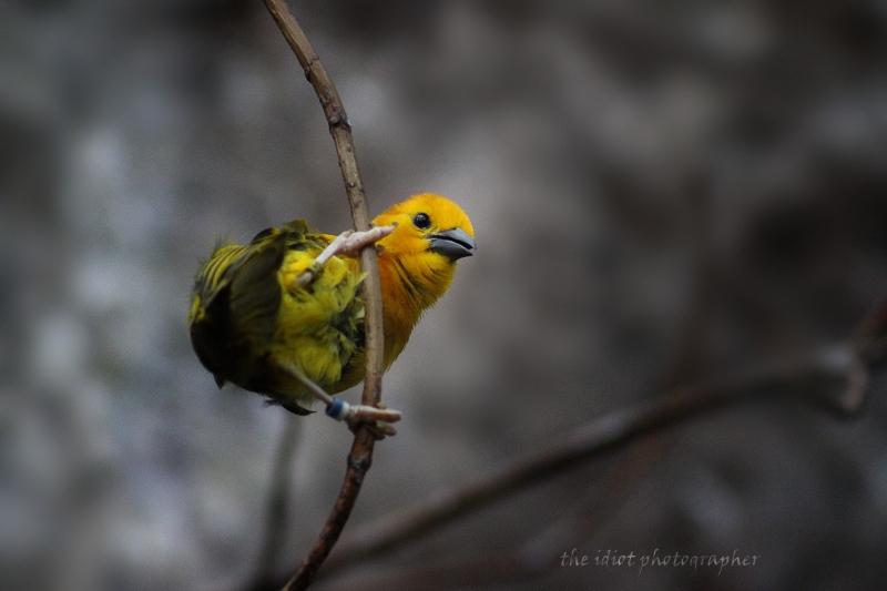 bird bfzoo smll