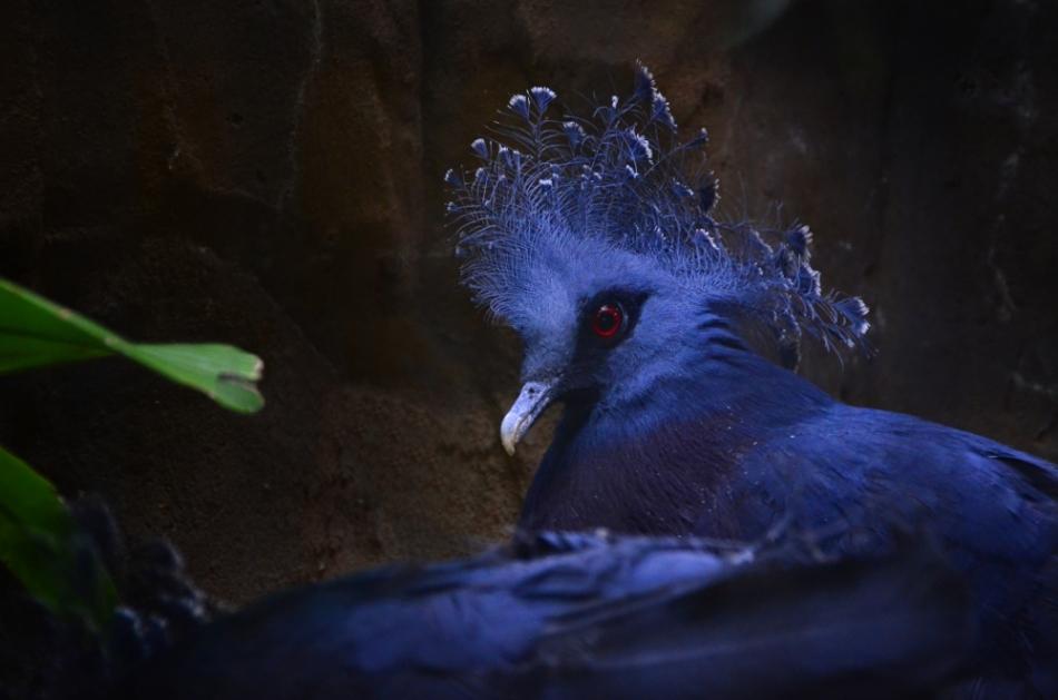 BlueBird.wp