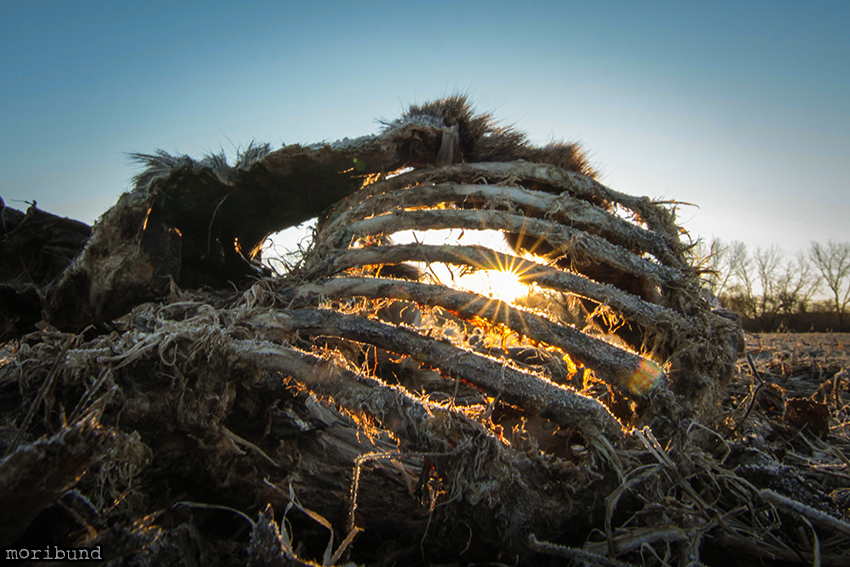 ribcage sunrise blog